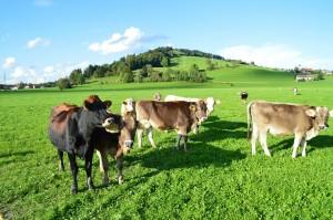 Auf einem Stück Grünland leben nicht nur Rinder