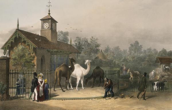 Der London Zoo war der erste Tiergarten, der sich als Zoo bezeichnete. (Gemälde von 1835)