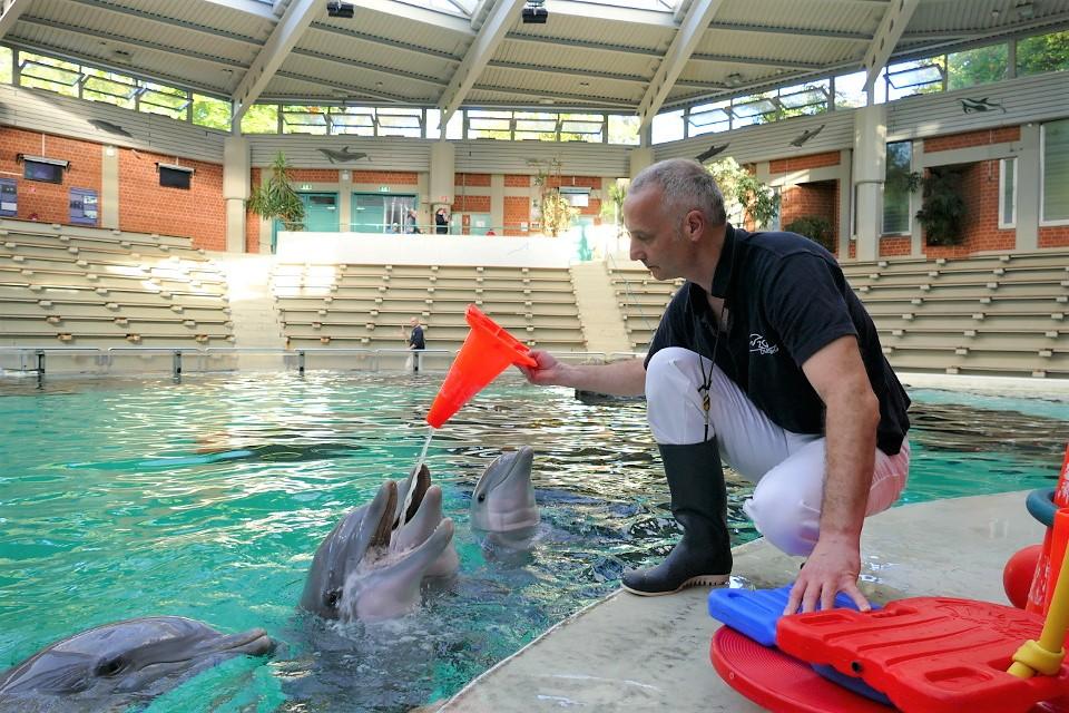 Zoo Duisburg Delfinarium: Delfinpfleger spielt mit Delfin mit einem Spielzeug (Pilon)