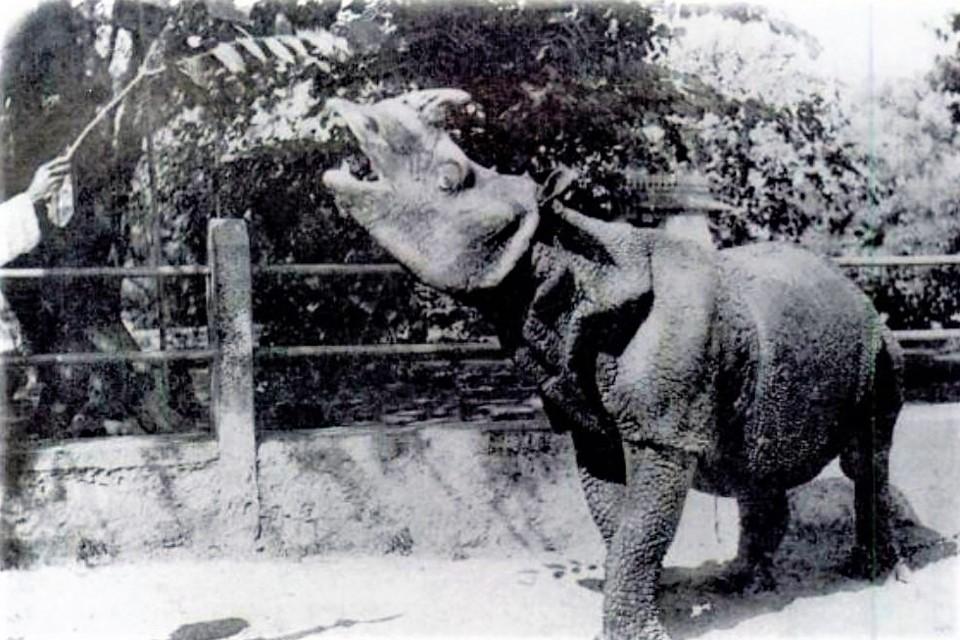 Java-Nashorn auf einer Postkarte